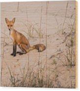 Beach Fox Wood Print
