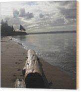 Beach Logs Wood Print