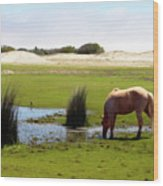 Beach Pony Wood Print