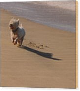 Beach Puppy Wood Print