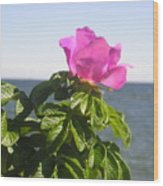 Beach Rose Wood Print