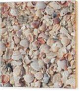 Beach Seashells Wood Print