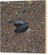 Beach Shell Wood Print