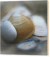 Beach Shells Wood Print