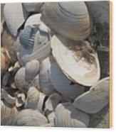 Beach Still Life IIi Wood Print