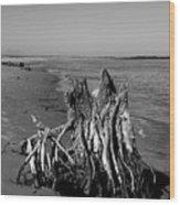 Beach Stump Wood Print