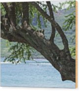 Beach Tree Wood Print
