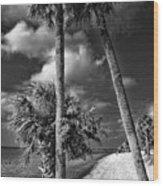 Beach Walk - Port Charlotte Beach Park, Florida Wood Print