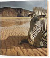 Beach Zebra Wood Print