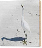 Beached Egret-bonita Beach Fl Wood Print