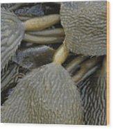 Beached Kelp Wood Print