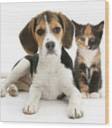 Beagle And Calico Cat Wood Print