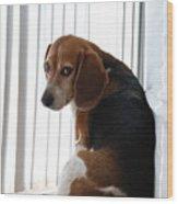 Beagle Attitude Wood Print