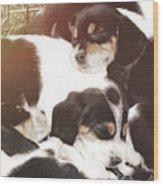 Beagle Pile Wood Print