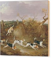 Beagles In Full Cry Wood Print