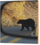 Bear Chance Wood Print