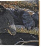 Bear Cub 2 Wood Print