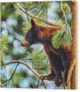Bear Cub In A Tree 3 Wood Print