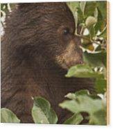 Bear Cub In Apple Tree3 Wood Print