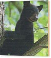 Bear Cub In Tree Wood Print