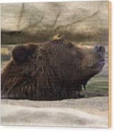 Bear Dip Wood Print