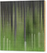 Bear Grass And Lodgepoles Wood Print
