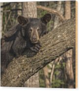 Bear In Tree Wood Print