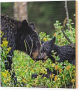 Bear Kisses Wood Print