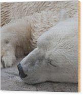 Bear Nap Wood Print