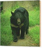 Bear On The Prowl Wood Print
