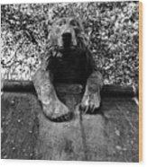 Bear On The Wall Wood Print