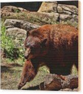 Bear Pacing Wood Print