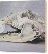 Bear Skull And Egg - Life Goes On Wood Print