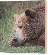 Bear Sleeping Wood Print