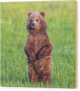 Bear Standing Tall Wood Print