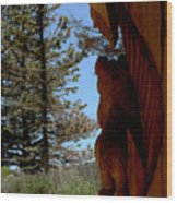Bear Watch Wood Print