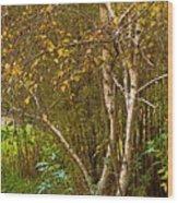Bearch Wood Print