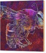 Bearded Bee Macro Insect Nature  Wood Print