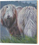 Bearded Collie In Field Wood Print