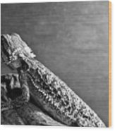 Bearded Dragon Wood Print