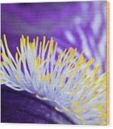 Bearded Iris Macro Wood Print