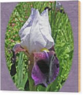 Bearded Iris Blossom Wood Print