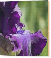 Bearded Iris Wood Print