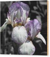 Bearded Irises Partial Color Wood Print