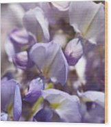 Beautiful And Magical Wisteria  Wood Print