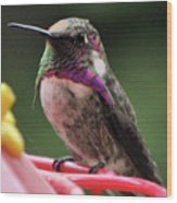 Beautiful Anna's Hummingbird On Perch Wood Print