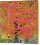 Beautiful Autumn Day Wood Print