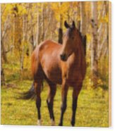 Beautiful Autumn Horse Wood Print