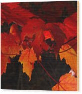 Beautiful Backlit Autumn Maple Leaves Wood Print