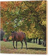 Beautiful Bay Horse In Fall Wood Print